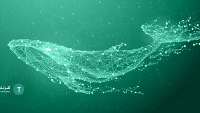 whale-crypto